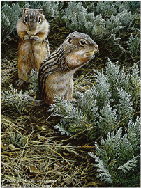 """John Seerey – Lester Limited Edition Print:""""Morning Forage - Ground Squirrel"""""""