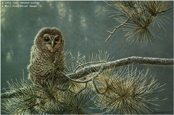 """John Seerey – Lester Limited Edition Print:""""Out On A Limb - Young Barred Owl"""""""