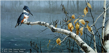 """John Seerey – Lester Limited Edition Print:""""Rain Watch - Belted Kingfisher"""""""