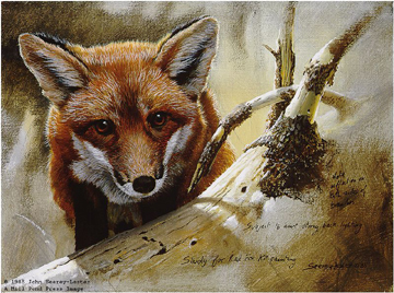 "John Seerey – Lester Limited Edition Print:""Red Fox Kit Study"""