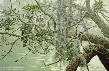 "John Seerey – Lester Limited Edition Print:""Spanish Mist-Young Barred-Owl"""