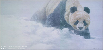 "John Seerey – Lester Limited Edition Print:""Wolong Whiteout"""
