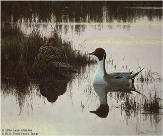 "Lars Johnson Limited Edition Paper Print:""Evening Light - Pintails"""