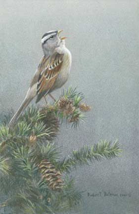 """Robert Bateman Handsigned & Numbered Limited Edition Print:""""White-Crowned Sparrow in Douglas Fir """""""