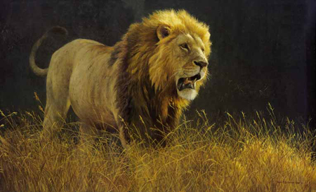 "Robert Bateman Limited Edition Paper Print:""Into The Light - Lion"""
