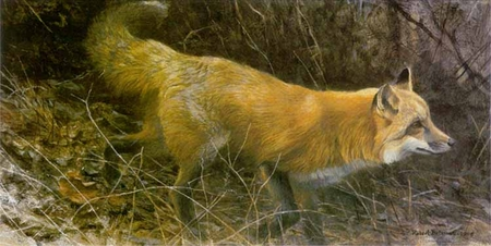 "Robert Bateman Limited Edition Print: ""On The Move - Red Fox"""