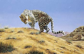 "Spencer Hodge Hand Numbered Limited Edition Print on Paper: ""Arabian Leopard"""