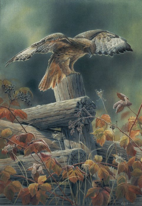 Susan Bourdet Handsigned Amp Numbered Limited Edition Print Quot Touchdown Red Tailed Hawk