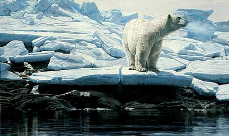 "Terry Isaac Limited Edition Print: ""Cumberland Sound - Polar Bear"""