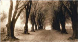 """Thea Schrack Photographs - Black and White: Sepia Toned:"""" Olive Grove Path"""""""