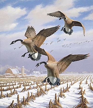 "Wildlife Prints By David Maas (Limited Edition Print): ""Winter Wonder- Canadian Geese"""