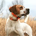 buy discount  Bird Dog Owner Gift Ideas