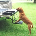 buy discount  Car & Truck Dog Stuff