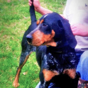 Chris D's Dog Hallie (Bluetick)