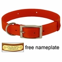 buy discount  ORANGE Scott Field-Grade Treated Nylon D-End Dog Collar