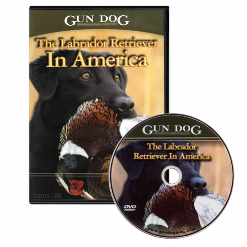 Gun Dog: The Labrador Retriever in America DVD