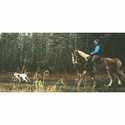 buy discount  K9K Padded Harness in Use on Horseback