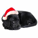 buy discount  Lab Owner Gift Ideas