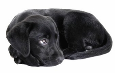 Puppy Training Supplies & Puppy Products