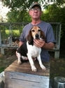 buy discount  Steve M's Dog Cloe (Beagle)