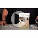 buy discount  VIDEO: Paul Long -- Training Pointing Dogs