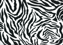Animal Print Zebra Swimwear White