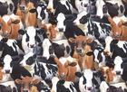 Cow Farm Animals