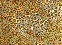 Golden Leopard Swimwear