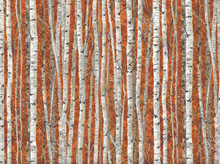 Landscape Silver Birch Cotton Orange