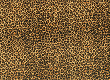 Mini Cheetah Print Swimwear