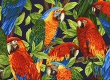 Robert Kaufman Parrots Cotton Navy