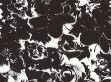 Scuba Knit Floral Black and White
