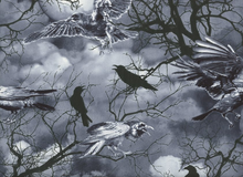 Wicked Crows Cotton Grey
