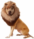 Animal Planet Lion Dog Costume - Small
