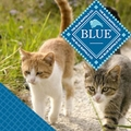 Blue Buffalo Dry Cat Food