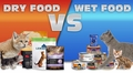 Dry vs Wet Cat Food