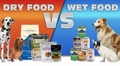 Dry vs Wet Dog Food