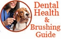 Good Dental Health and Brushing Guide