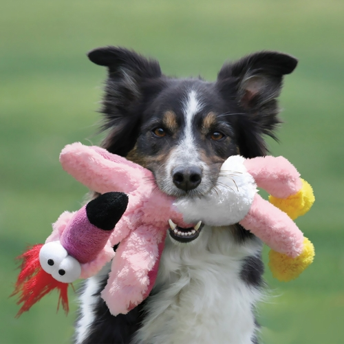 Home Dog Toys Plush & Stuffing-Free Dog Toys KONG Wild Knots Squeakers
