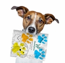 NEW & FREE HealthyPets Coloring Book for Dogs & Cats!