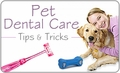 Pet Dental Care: Tips & Tricks