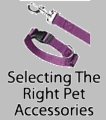 Selecting The Right Pet Accessories
