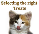 Selecting The Right Treats For Your Dogs or Cats