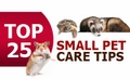 Small Pet Care Tips - Care for Ferretts, Rabbits, Hamsters & Gerbils