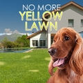 Stop Dog Urine from Yellowing Your Lawn