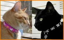 Beastie Band Cat Collars