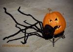 A Pumpkin That Eats Spiders