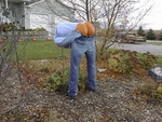 Mooning Pumpkin