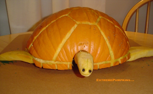 The Sea Turtle Pumpkin