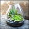 "10.5"" Medium Glass and Stone Terraza Terrarium"